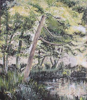 Light Shimmering Pond by Jenny A Jones