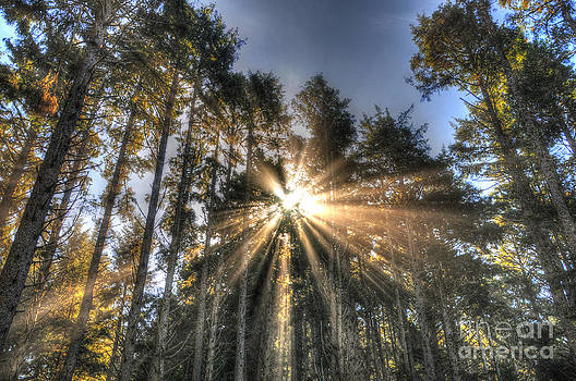 Sarah Schroder - Light the Trees