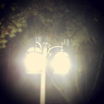 Light Up the Night by Thomasina Durkay