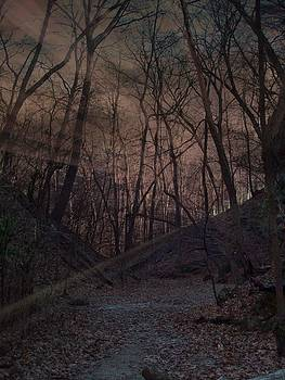 Lighted Pathway by Sue Midlock