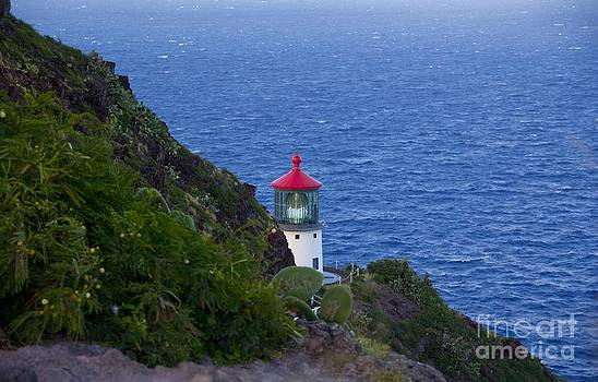 Lighthouse on the Cliff by Kim Quintano