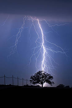 Lightning Bolts Striking Behind Tree by Mark Van Scyoc