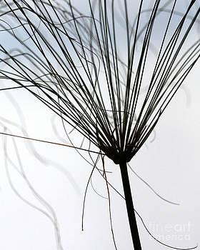Sabrina L Ryan - Like a Broom
