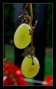 Like cherries... by Marija Djedovic