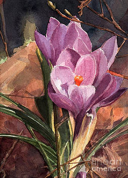 Lilac Crocuses by Greta Corens