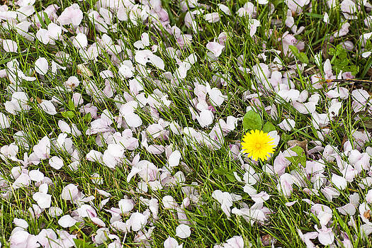 Steven Ralser - Lilac Petals - Arboretum - Madison