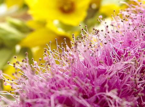 Lilac sering blossom by Yvon van der Wijk