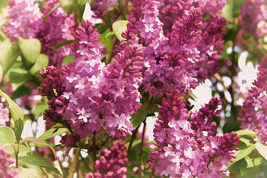 Lilacs - For Mom by Kathy Bassett