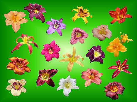 MTBobbins Photography - Lilies Floating on Green