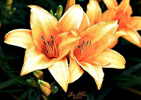 Lilies by Janet Moss