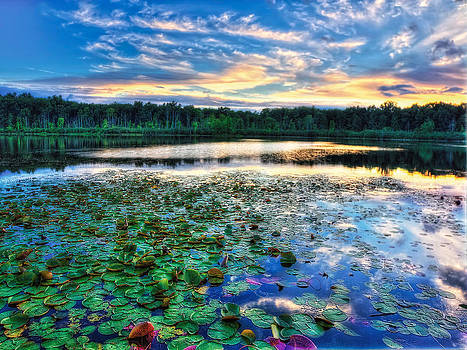 Lilies on the water by Jenny Ellen Photography