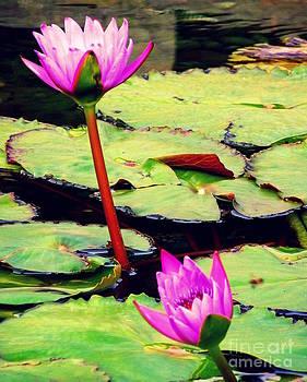 Shawna Gibson - Lilies