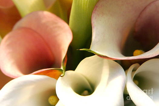 Lilly Color Set  by Kimberly Nickoson