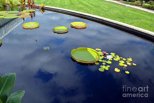 Lilly Pads by Anne Marie Corbett