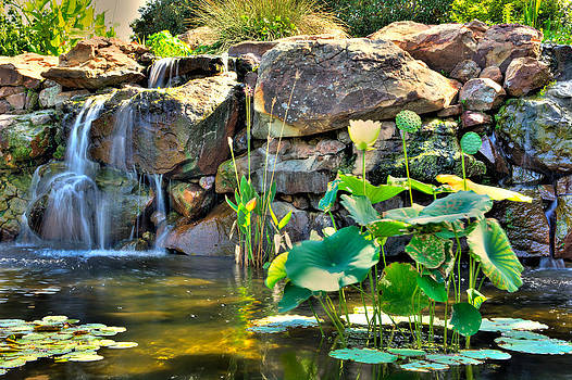 Lily pads by the waterfall by Geoff Mckay