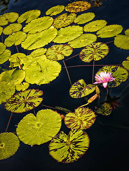 Dennis James - Lilly Pads
