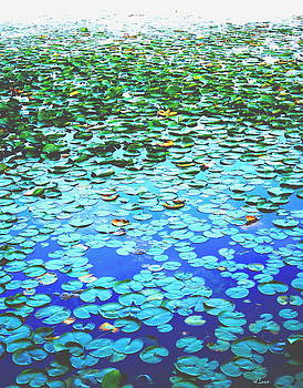 Lilly pads by Wendell Lowe