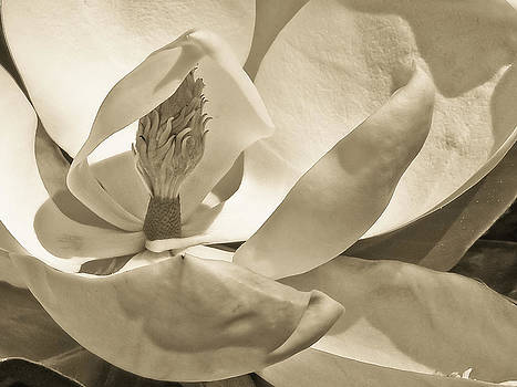 Lily Duotone by Bill Boehm