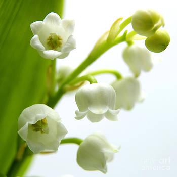 BERNARD JAUBERT - Lily of the valley