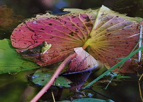 Lily Pad Beauty by Joy Bradley