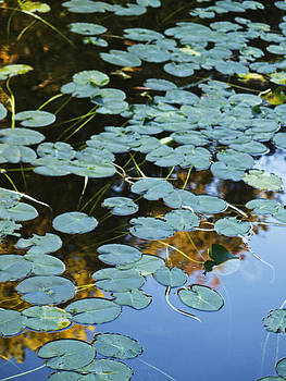 Lily Pads by Ed Cooper