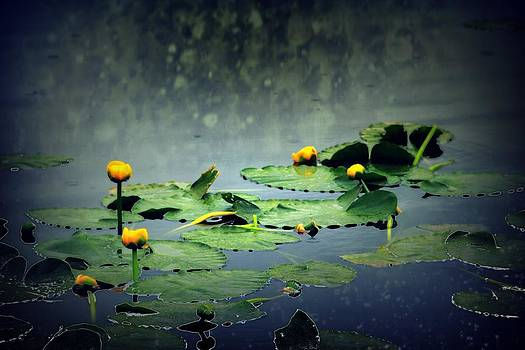 Lily Pads in the Rain at Vernonia Lake by Dawna Morton