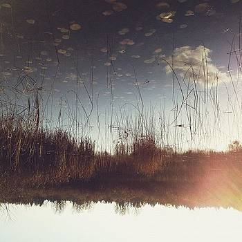 Lily Pads In The Sky by Rebecca Guss