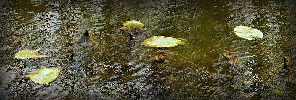 Lily Pads by Jessica Grandall