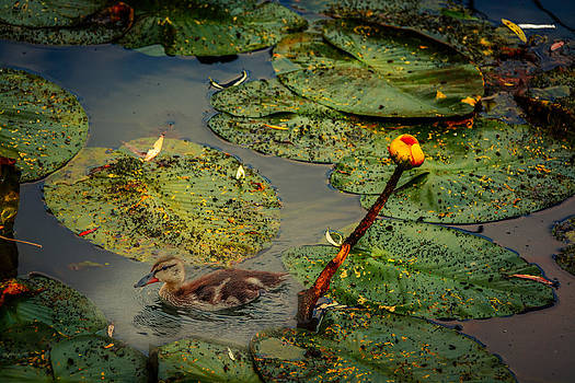 Lily Pond by Ludmila Nayvelt