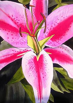 Lily Tenerife by Sacha Grossel