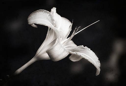 Zoran Buletic - Lily