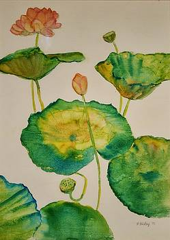 Lilypads 1 by Helen Hickey