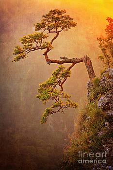 Limba on the  Sokolica Peak by Izabela Kaminska