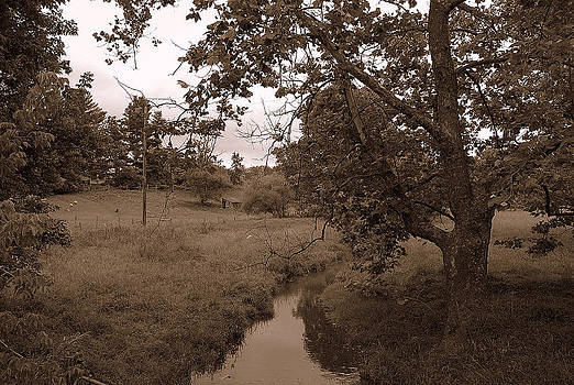 Lime Creek by M Hess