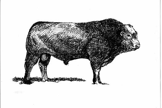 French Limousine Bull by Larry Campbell