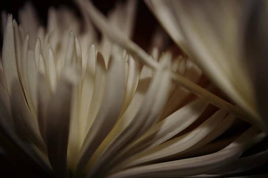 Linen Petals by Tara Miller