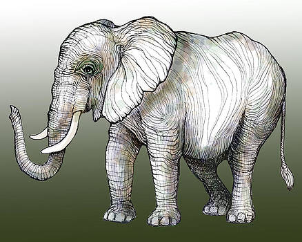 Lines of an Elephant by Michelle Scott