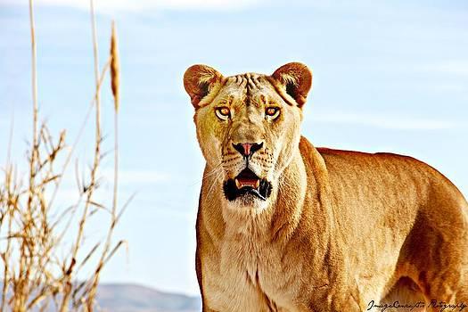 Lion by Emily Fidler