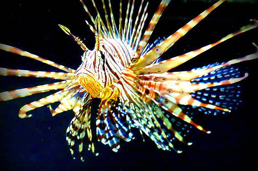 Lion Fish by Jessica  st Lewis