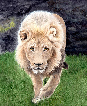 Lion from Woodland Park Zoo by Inger Hutton