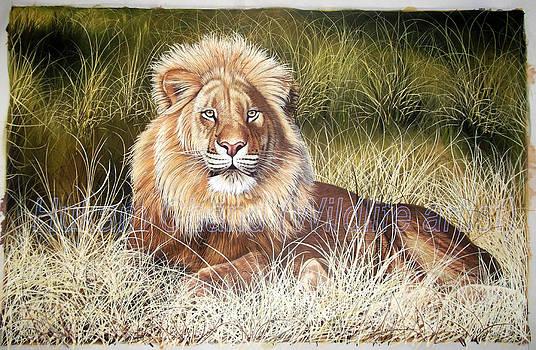 ''lion In Grass''  by Hukam Chand Wildlife artist