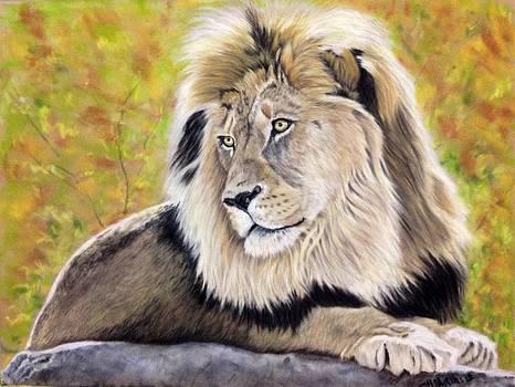 Lion by Michelle McAdams