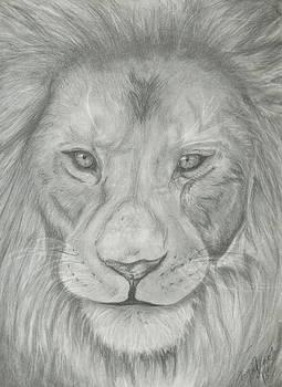 Lion by Raquel Ventura