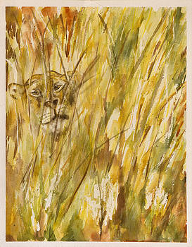 Lion Through the Grass by Rina Bhabra