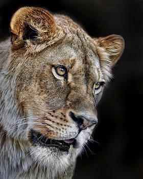 Nikolyn McDonald - Lioness #2