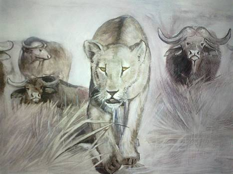 Lioness by Andrick Jean