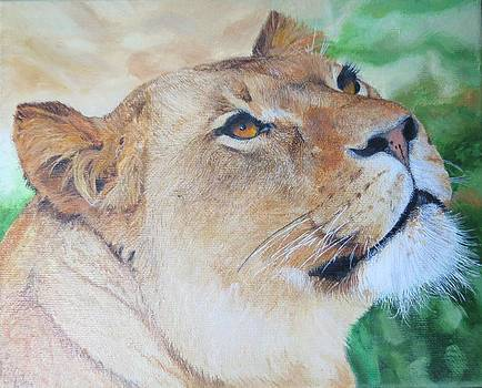 Lioness Big Cat Oil Painting Hand Painted 8 x 10 inches by Pigatopia by Shannon Ivins