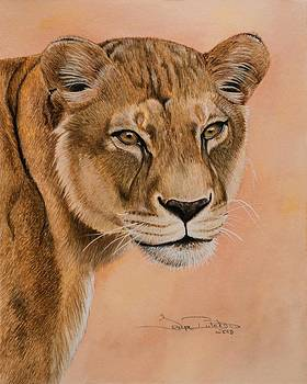 Lioness by Tonya Butcher