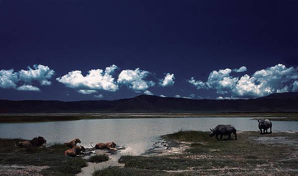 Lions vs Rhinos by Joe  Connors