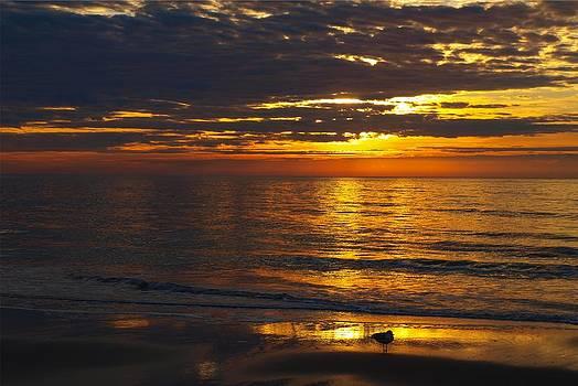 Liquid Gold Dawn with Sea Gull # 2 by Kathleen Palermo
